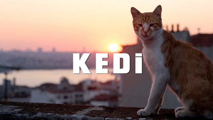 """""""Kedi"""" 9 Haziran'da Evine Dönüyor!"""